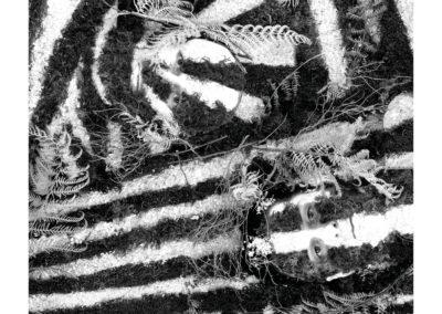 BLACKBIRD HILL · Razzle Dazzle